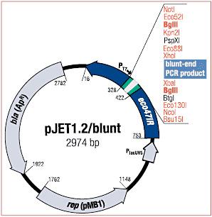 k123_2 pjet clonejet